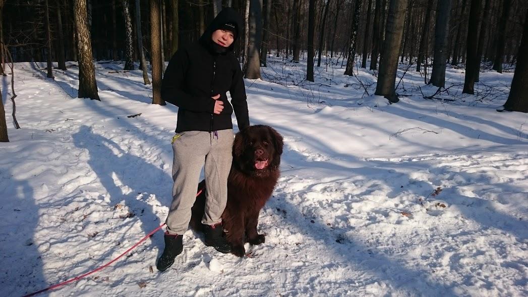 spacer w lesie z nowofundlandem