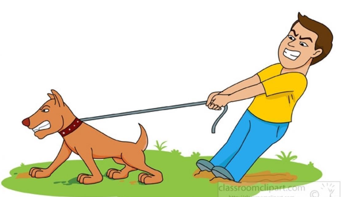 Pies ciągnie na smyczy