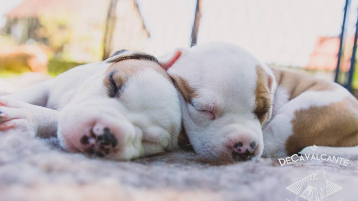 Socjalizacja szczeniaka - jak wychować mądrego psa