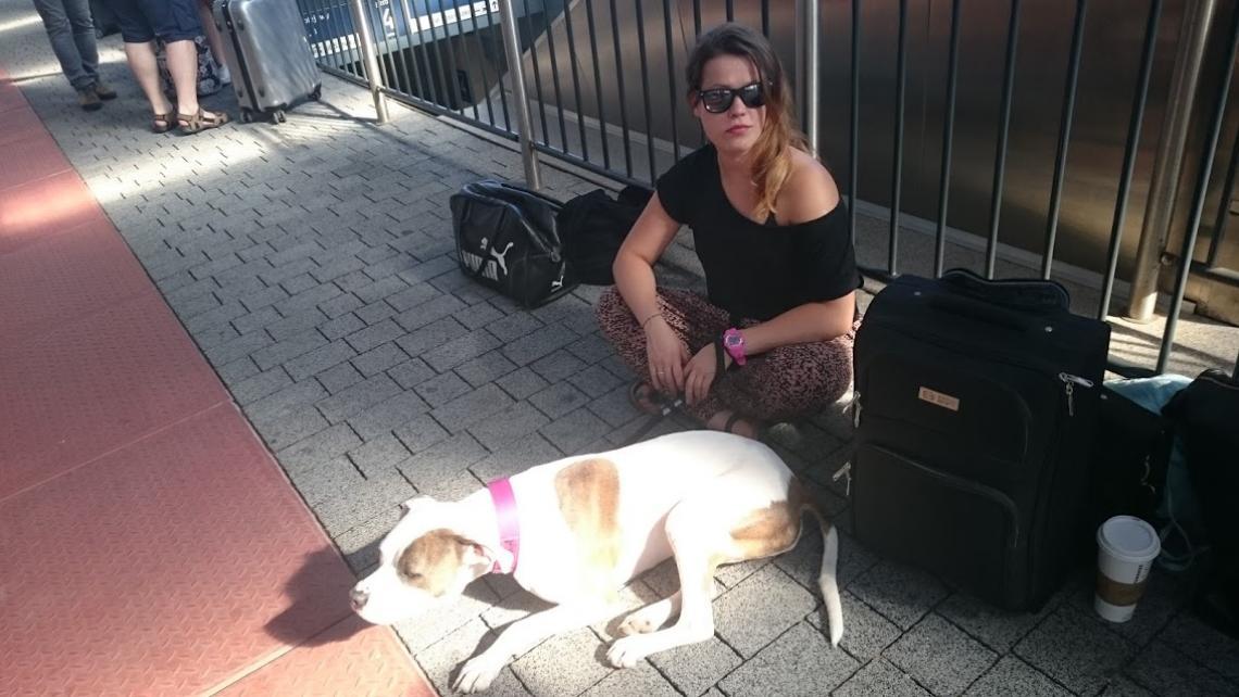 pies w hotelu dla psów