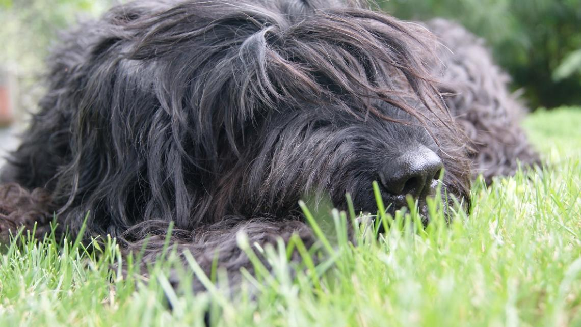 Roxi od leniucha do aktywnego psa