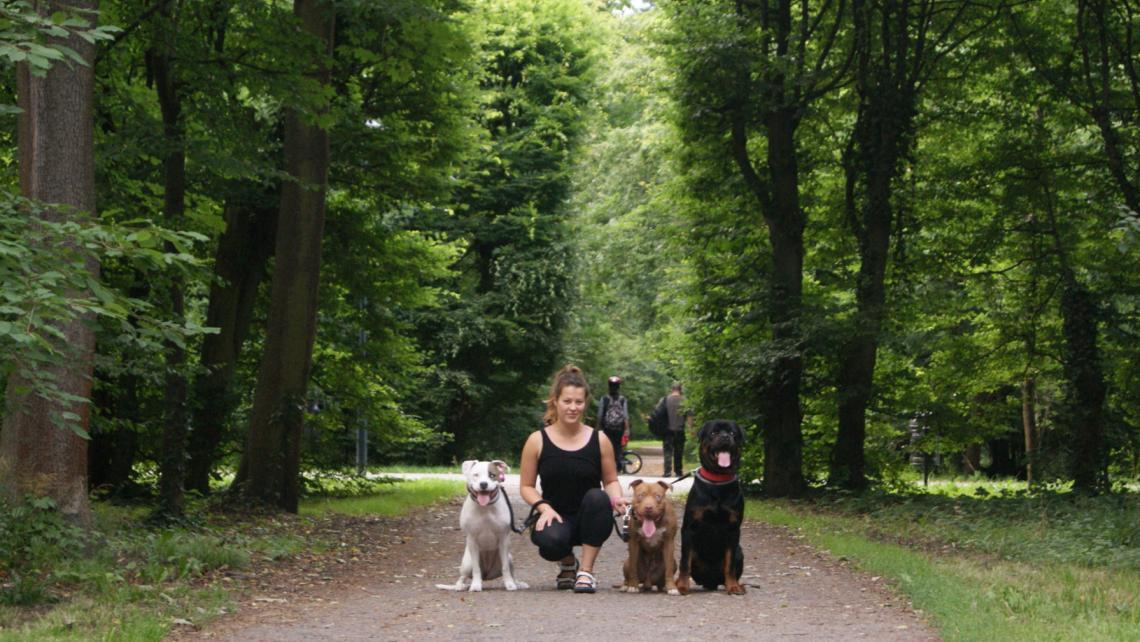spacery z psami