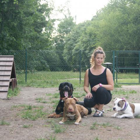 Pitbull Wafel, Rottweiler Rocky & Amstaff Teqi