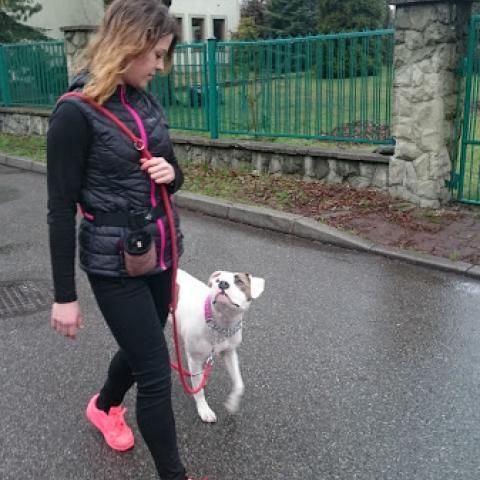 Teqi więź przewodnik - pies