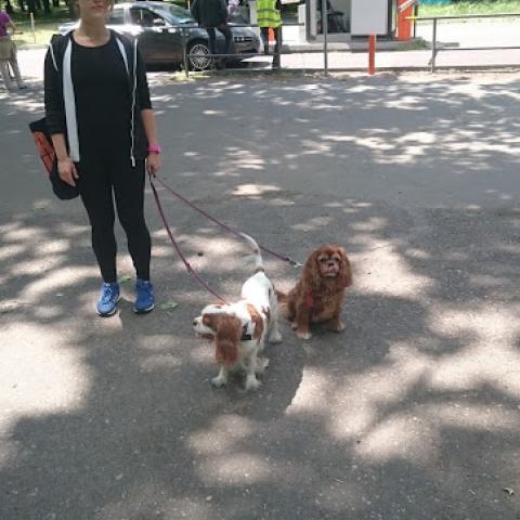Cavalier King Charles Spaniel Ruduś & Mika
