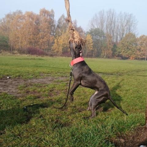 Pitbull Bloody Sunday, spring pole - psi sport