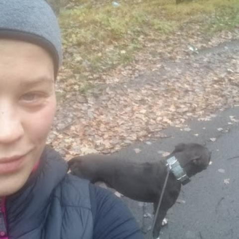 Pitbull Dexter, canicross - bieganie z psem