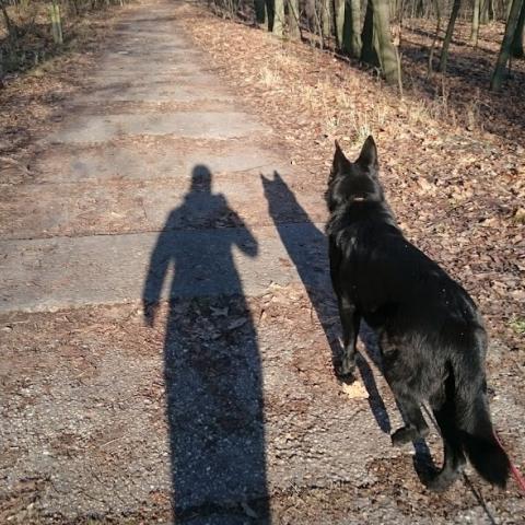 Owczarek niemiecki ROKSI spacer indywidualny