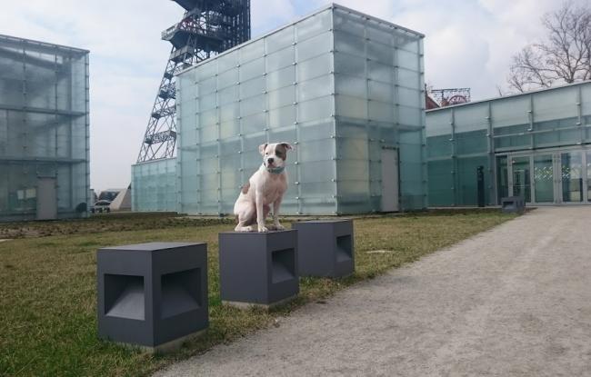 socjalizacja psa w muzeum śląskim