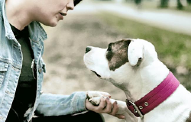 Jak oduczyć psa ciągnięcia na smyczy