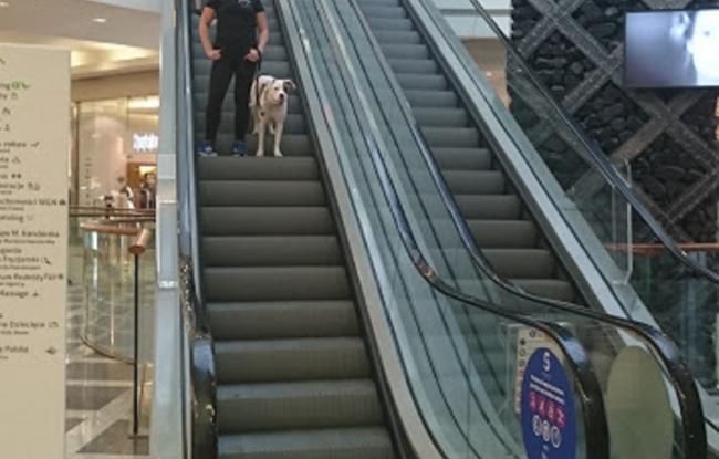 pies na ruchomych schodach