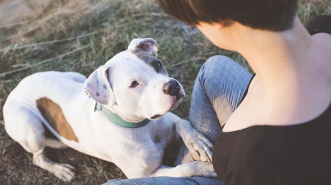 szkolenie psa, pies skupia się na przewodniku